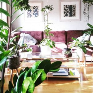 Best Houseplants To Grow During Summers